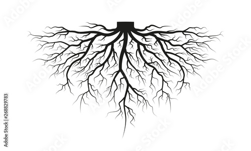 Photo Root of the tree. Black silhouette. Vector illustration.