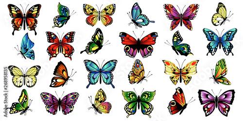 Photo set multicolored butterflies