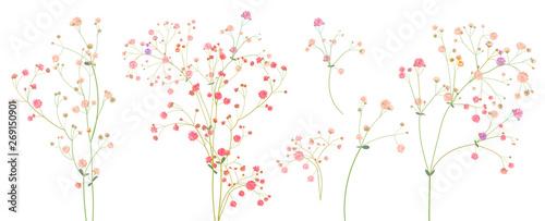 Fotografia Twigs of gypsophile paniculata