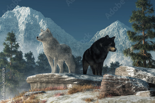 Two wolves stand upon a snow covered rock deep in the North American wilderness looking for prey. One of the predators is a white coated arctic wolf, the other a black furred gray wolf. 3D Rendering