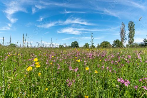 Carta da parati Prairie en fleur au printemps