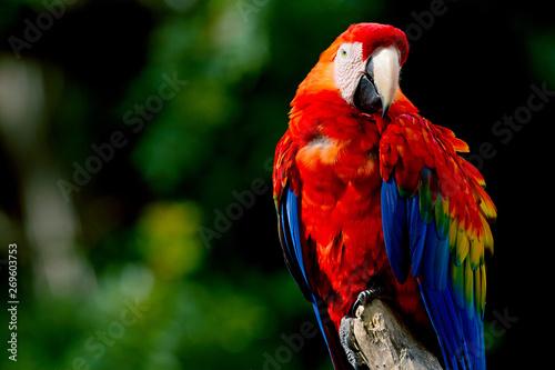 Parrot Fototapeta