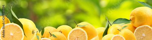 Fotografia, Obraz Lemons from your favorite garden