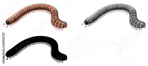 Vászonkép Set of millipede character