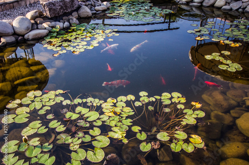 Fototapeta Beautiful small pond with fishes