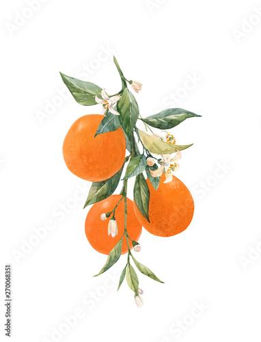 Carta da parati Watercolor citrus fruits illustration