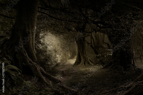 Fotografia Tropical forest in darkness