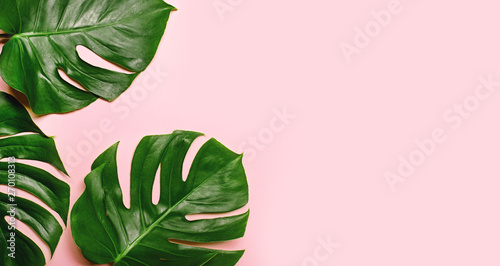 Canvastavla Tropical monstera leaves on pink background.