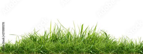 Fotografie, Obraz Fresh green grass isolated against a white background