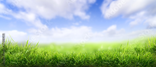 Fotografia Lush spring green grass background with a sunny summer blue sky over fields and pastures