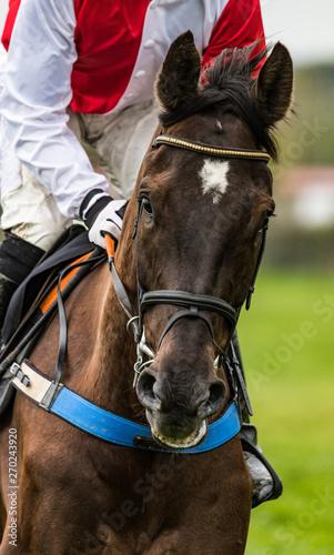 Fényképezés Portait of a race horse galloping on the race track