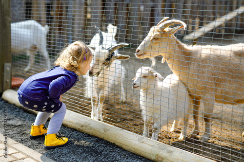 Stampa su Tela Adorable cute toddler girl feeding little goats and sheeps on a kids farm