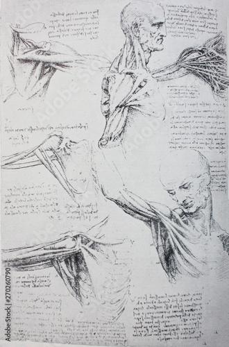 Wallpaper Mural Anatomical notes