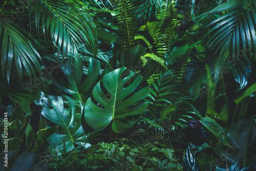 Naklejka na szafę Tropikalne liście palmowe