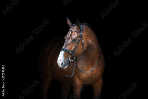 Horse portrait in bridle isolated on black background Fototapet