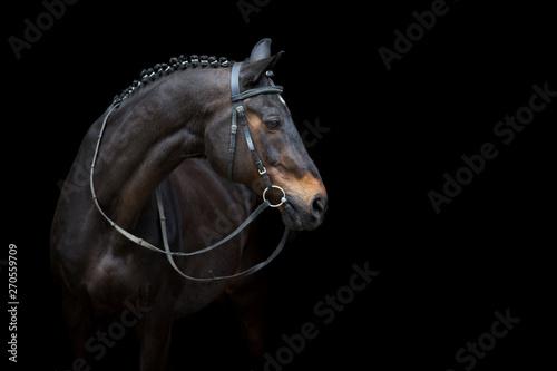 Valokuvatapetti Horse portrait in bridle isolated on black background