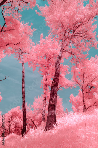 Photo Scenic view of trees during summer