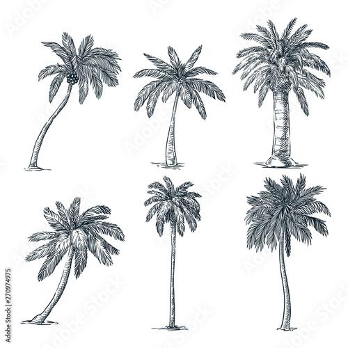 Tropical coconut palm trees set Fototapeta