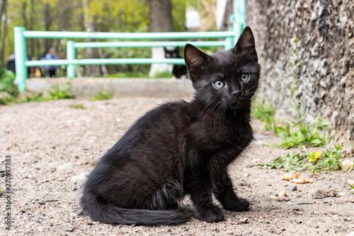Obraz na płótnie black kitten on the street