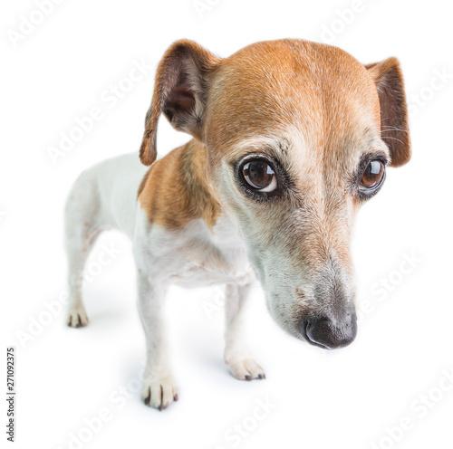Photo Sad dog face