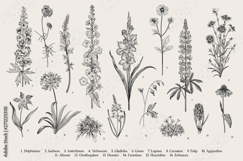 Photo Garden flowers