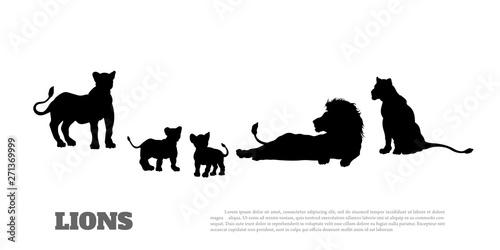 Fotografie, Obraz Black silhouette of  lion pride on white background