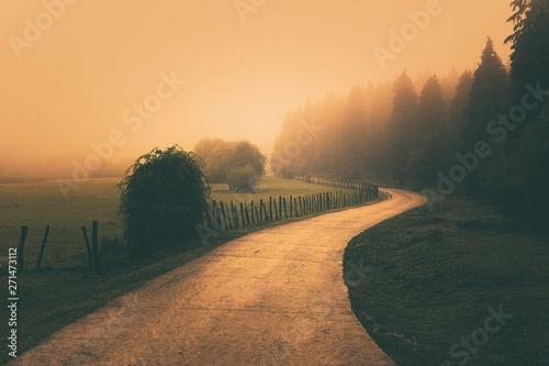 Fototapeta vintage nature landscape with a foggy path