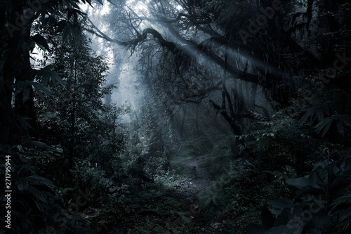 Stampa su Tela Deep tropical forest in darkness