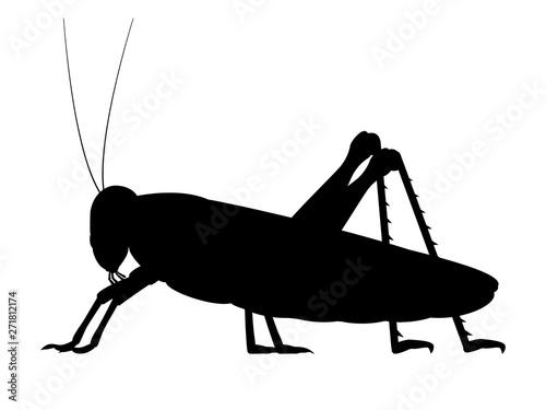 Tablou Canvas Vector black silhouette of a grasshopper