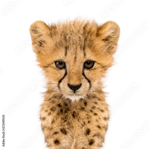 Billede på lærred Close-up on a facing three months old cheetah cubs, isolated
