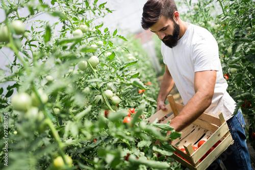 Attractive happy male farmer working in greenhouse Fototapeta