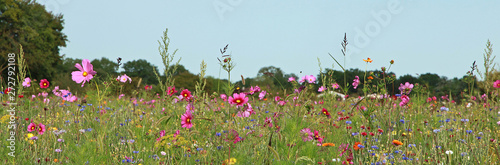 Fotografia Jachère fleurie