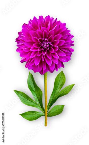Fotografija Combined unusual dahlia flower