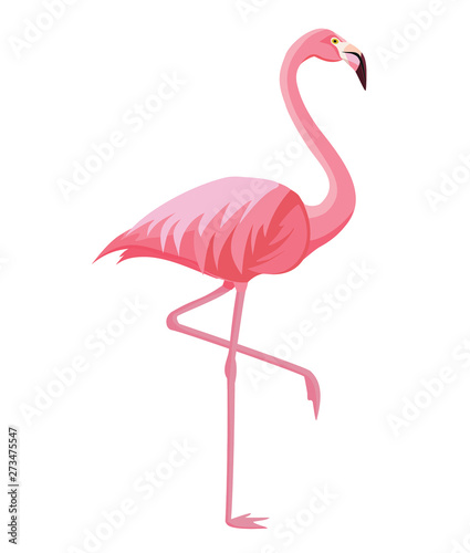 Fotografia, Obraz Pink flamingo on a white background. Vector illustration.