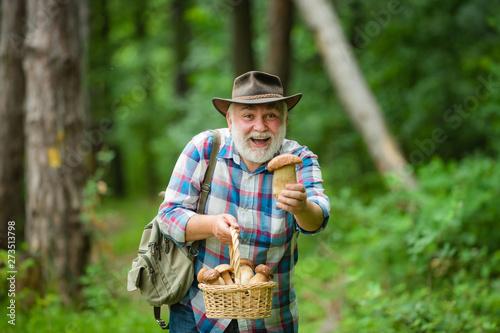 Picking mushrooms Fototapeta