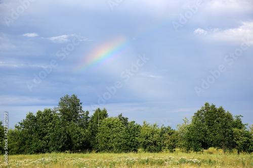 Piękna kolorowa tęcza nad zielonym liściastym lasem, łąką.