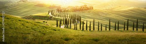 Fototapeta premium Włoski krajobraz z krętą drogą z cyprysami o zachodzie słońca