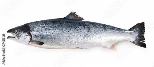 Fotografia salmon fish isolated on white background
