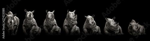 Canvas Print Moving rhino monochrome