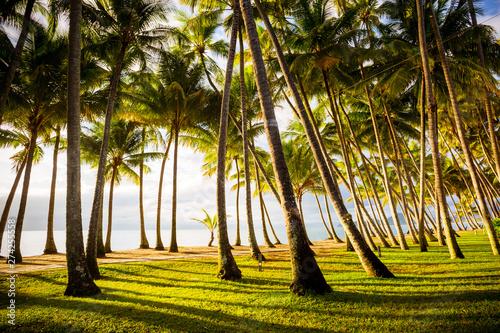 Foto Palm Cove Beachfront