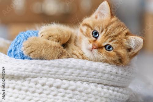 Fototapeta Cute kitten playing with balls of yarn