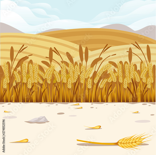 Fotografia Wheat field illustration with rural landscape and good sunny day on background h