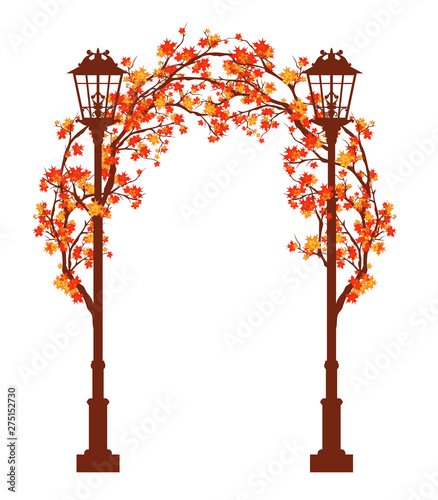 Foto streetlights among autumn maple tree branches forming an arch - fall season arch