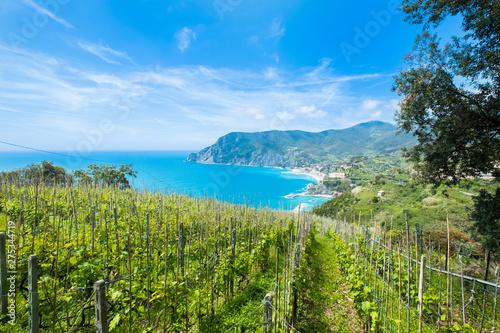 Stampa su Tela Weingut bei Cinque Terre 2