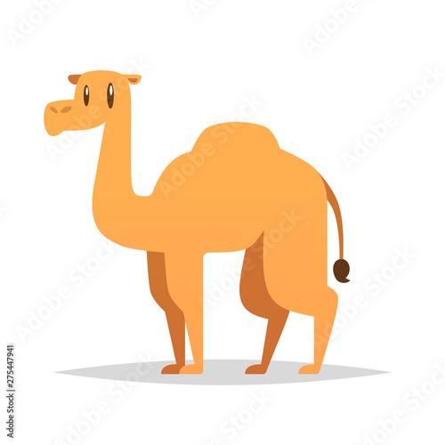 Obraz na płótnie Cartoon camel vector isolated illustration