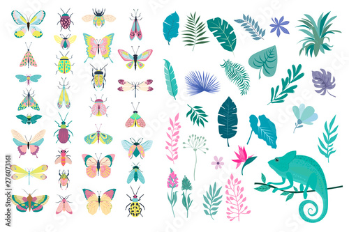 Fotomural Set of plants and insects - beetles, butterflies, moths