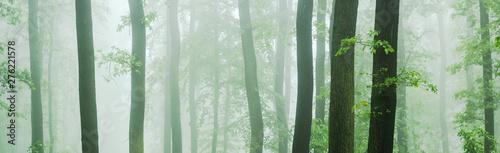 Mata na ścianę w kuchni  panorama-lasu-bukowo-debowego-w-gestej-mgle