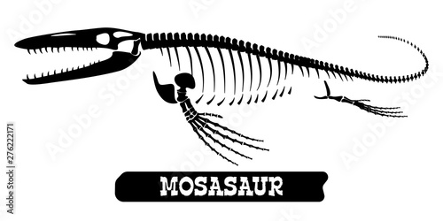 Skeleton of a fossil waterfowl dinosaur. Mosasaur. Vector фототапет