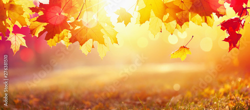Valokuva Falling Autumn Maple Leaves Natural Background