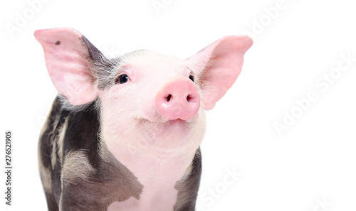 Fotografia Portrait of a cute cheerful pig isolated on white background